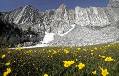 Rock Climbing Photo: the meadow