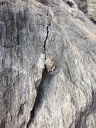 Rock Climbing Photo: A frog - just some of the wildlife you may encount...