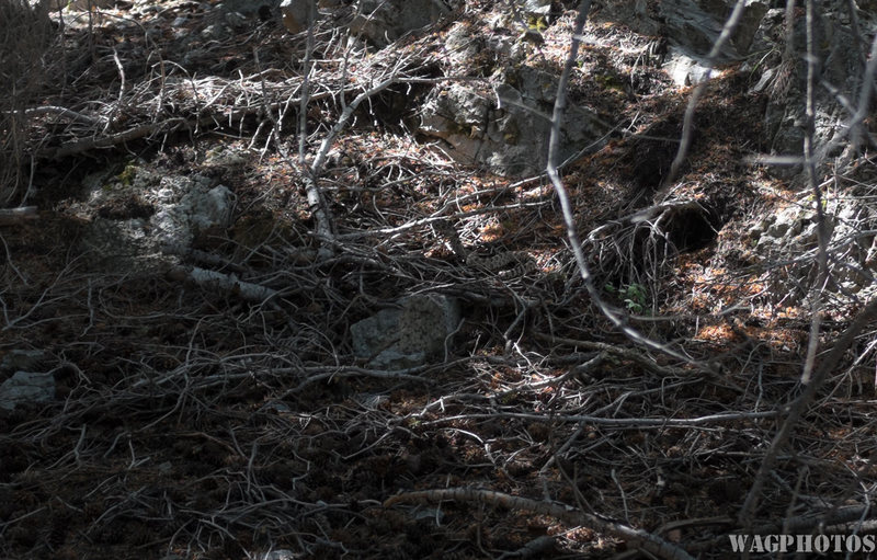 Rock Climbing Photo: Rattlesnake above the camping