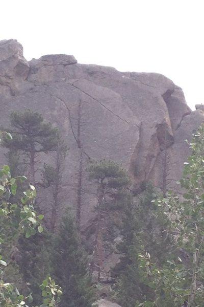 Rock Climbing Photo: Hanging Tree?