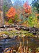 Rock Climbing Photo: Fall colors at the Little River Wall. October 2013...