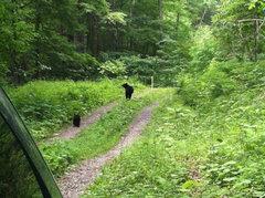 Rock Climbing Photo: Be Bear Aware