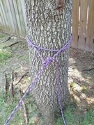 Rock Climbing Photo: Tree anchor made w/ rope. Bowline backed up w/ dou...
