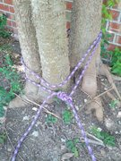 Rock Climbing Photo: Tree used as anchor other side leg. Bowline backed...