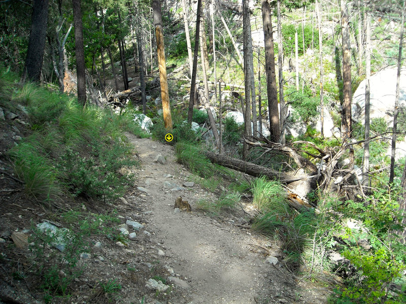 From the Sunset trail (trail off of which River Boulder lies), turn off here to go down the hill and into Gandalf's Gorge. <br> <br> Note the large uprooted tree stump as a landmark, and follow the cairns.