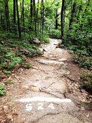 West Bluff trail. July,2014.