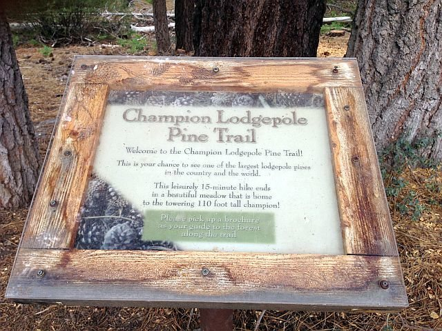 Rock Climbing Photo: Champion Lodgepole Pine Trail Marker, Big Bear Sou...