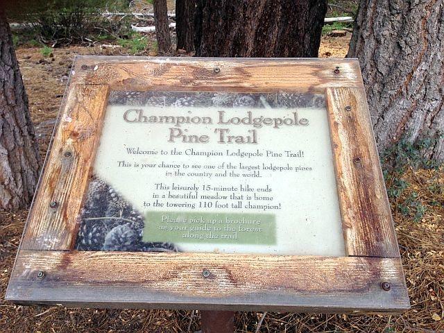 Champion Lodgepole Pine Trail Marker, Big Bear South