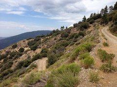 Rock Climbing Photo: Sugarloaf Truck Trail/Radford Road (2N06), San Ber...
