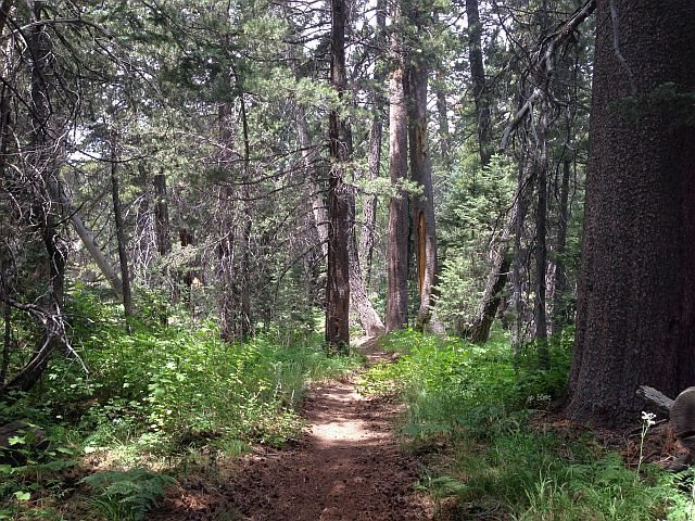 Siberia Creek Trail, Big Bear South