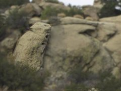 Rock Climbing Photo: Rabbit Petroglyph at Stoney Point