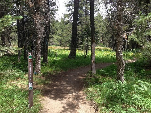 Champion Lodgepole Pine Trail, Big Bear South