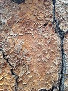 Rock Climbing Photo: Ponderosa Pine bark detail, Big Bear South