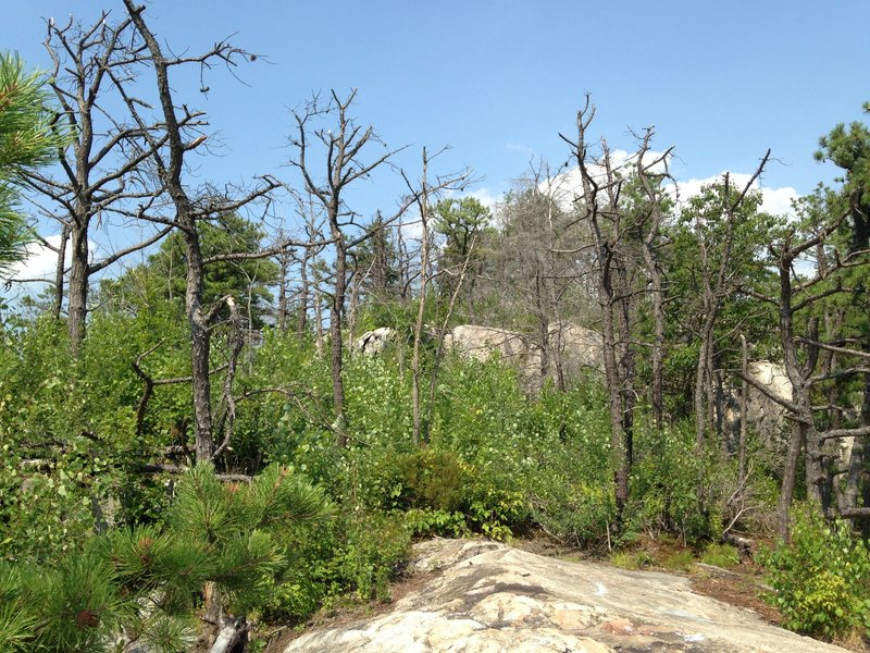 Top of the slab in 2014.  Trees dead from 2010 brushfire.
