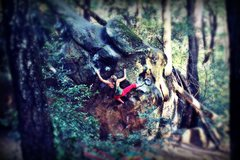 Rock Climbing Photo: Courtney Ceran on the Tree Problem (V4), Parking L...