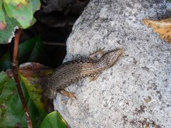 "Rock Climbing Photo: A local basking on a clear day near ""Sammy's ..."
