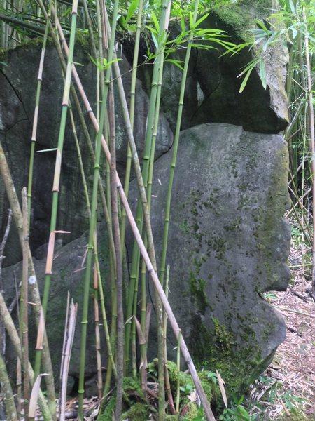 Back of boulder