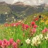 San Juan Wildflowers