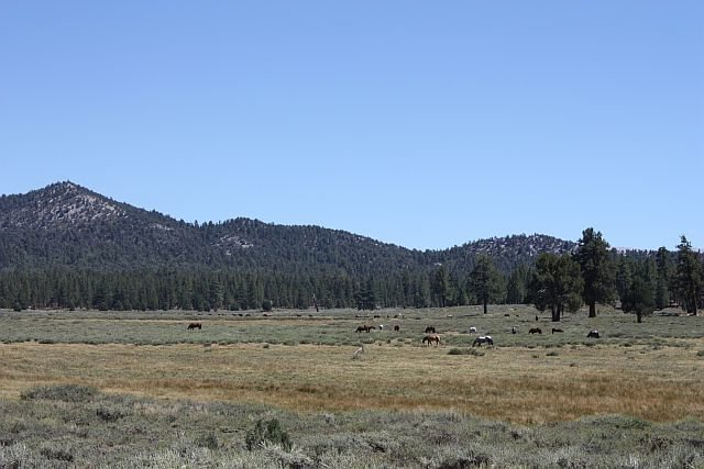 Horses grazing at the Hitchcock Ranch, Holcomb Valley