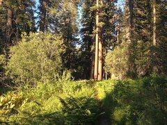 Rock Climbing Photo: Siberia Creek Trail, Big Bear South