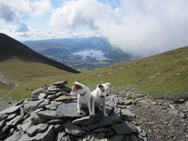Terriers near the summit of Skiddaw Mt . Looking down to Keswick and Lake Derwentwater