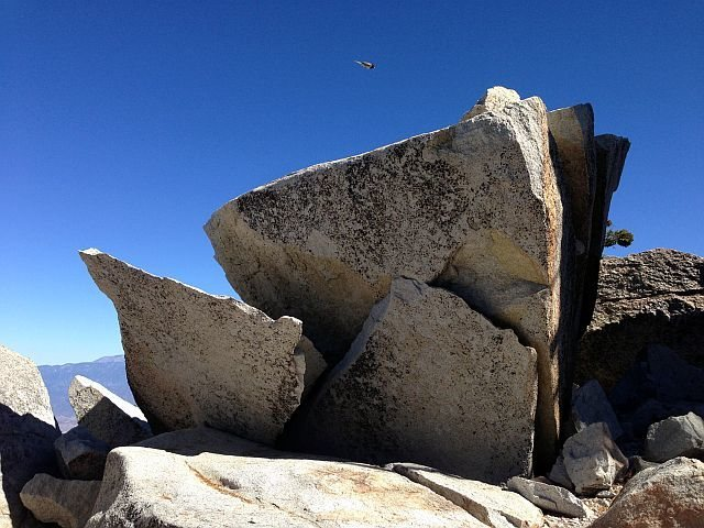 Bird and boulders, Black Mountain