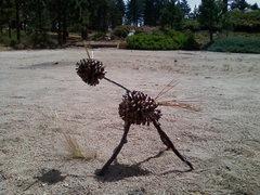Rock Climbing Photo: The Pine Cone Pet.