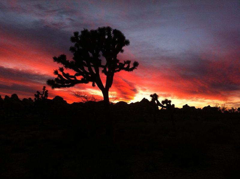 J-tree sunset