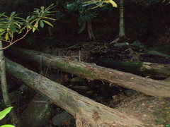 Rock Climbing Photo: The log crossing about 15 minutes into the hike. C...