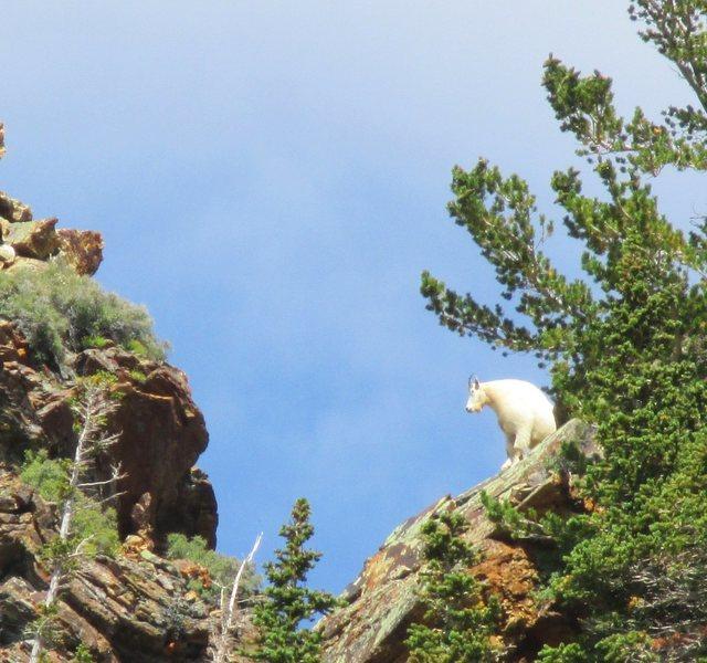 Rock Climbing Photo: Cottonwood Traverse Photo by Aerili