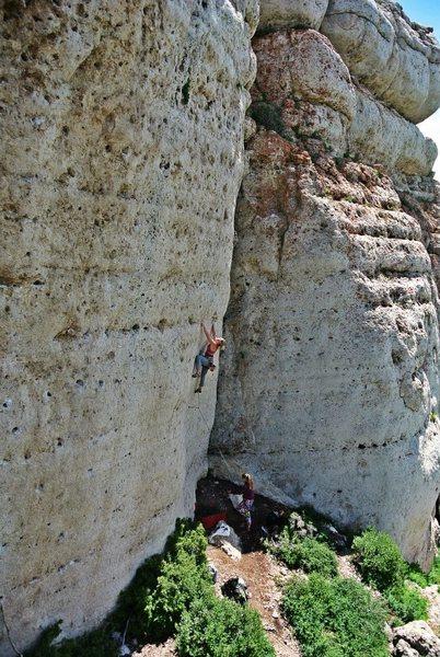 Wild Iris, Zorro Wall