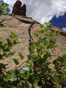 Rock Climbing Photo: You climb over a bush to start, and you can sew it...