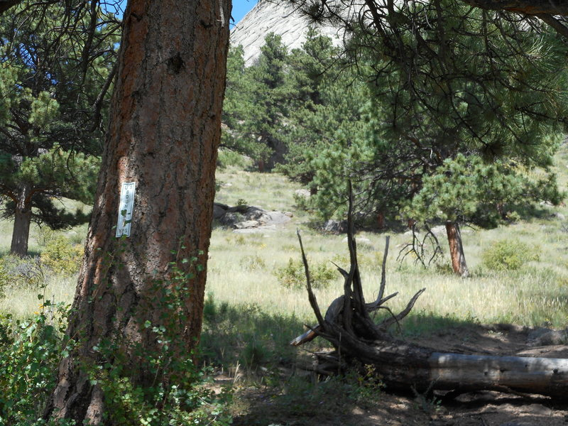 Rock Climbing Photo: We found this RMNP boundary sign on a tree marking...