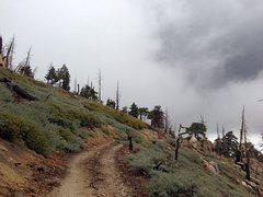Rock Climbing Photo: Stormy clouds along 2N19A, San Bernardino Mountain...