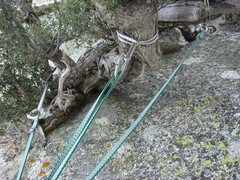 Rock Climbing Photo: The Tree anchor, second to last belay!