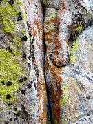 Rock Climbing Photo: Lichen Splitter!