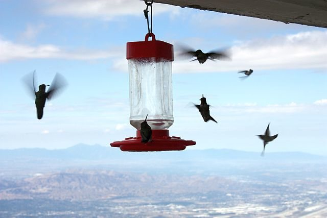 Hummingbirds coming in for a landing at the fire lookout, Keller Peak