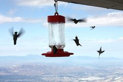 Rock Climbing Photo: Hummingbirds coming in for a landing at the fire l...