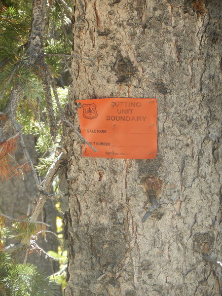Rock Climbing Photo: Obvious trail behind the tree with this sign.