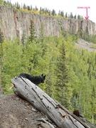 Rock Climbing Photo: Ella listening to Elk. Down chute in the back grou...