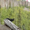 Ella listening to Elk. Down chute in the back ground.