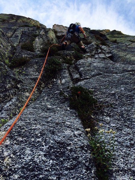 Rob Beno leading P4 of the Timex Route. This photo gives a good idea of the amount of vegetation on route.