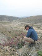 Rock Climbing Photo: Flower's desert
