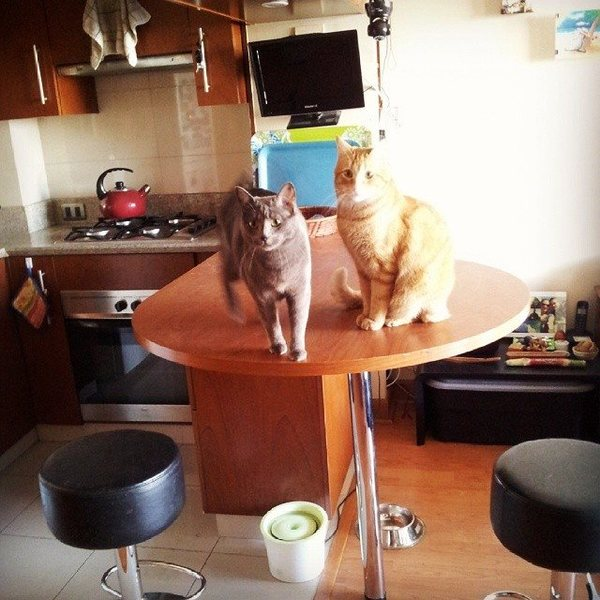 Rock Climbing Photo: my cats at home