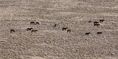 Rock Climbing Photo: Wild horses at Manassa.
