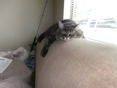 """Rock Climbing Photo: Kickin' back on the sofa after a session of """"..."""