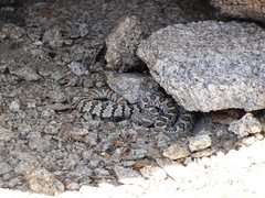 Rock Climbing Photo: Found this guy hidden in the shade at the start of...
