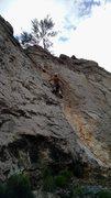 Rock Climbing Photo: Good view of Tidy Cat's line.
