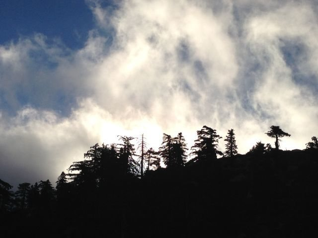 Early morning fog and silhouetted pines, Keller Peak