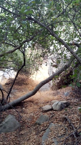 Trail View right above roadside boulder